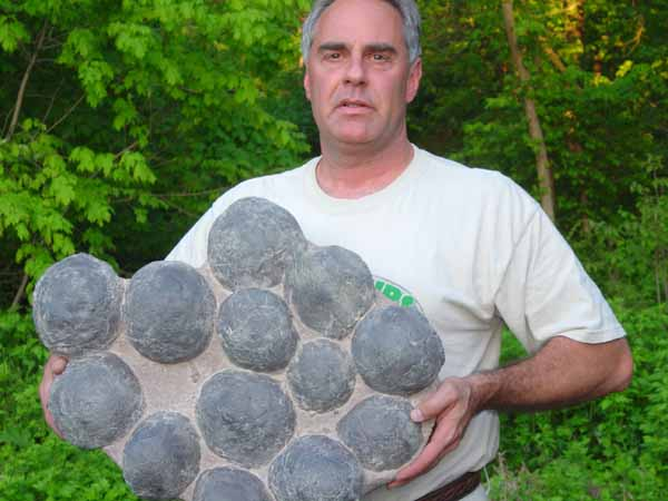 dinosaur replica eggs